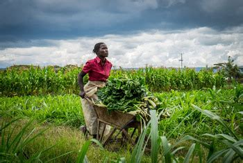Adaptation to climate change in the agricultural sector of