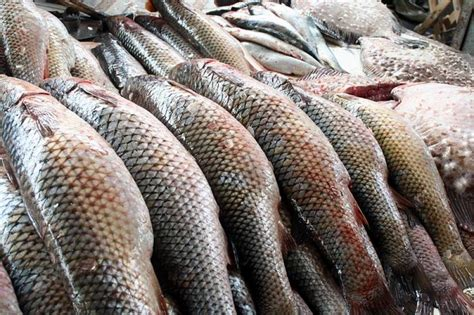 Where are fish delicacies from Kazakhstan imported