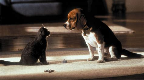 Cats & Dogs (2001) directed by Lawrence Guterman