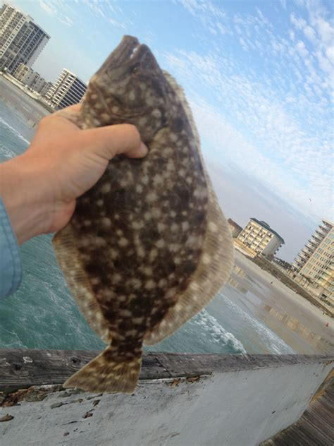 How to Catch Flounder   Fishing from Florida Shores